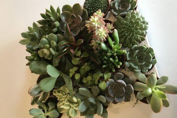 Succulent Sity